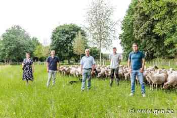 """Watermaatschappij zet weer schapen op bufferbekken, in plaats van machines: """"Goedkoper én socialer"""" - Gazet van Antwerpen"""