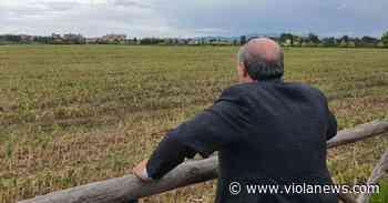 Franchi, Fiorentina in silenzio. Ancora in piedi la soluzione Campi Bisenzio - Viola News