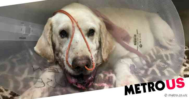 Hero dog saves owner from rattlesnake and survives bite