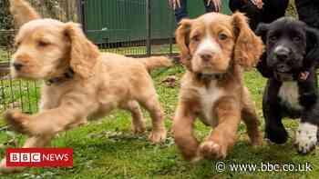 Commonwealth Games: Birmingham 2022 puppies in training