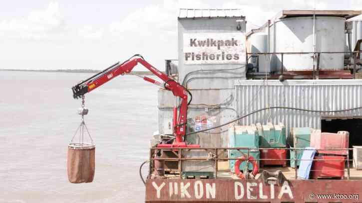 Fearing dismal salmon runs, Kwik'Pak fisheries pivots to gardening