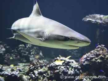 Tubarão morde banhista a 40 metros da costa em Santa Rosa Beach (FL) - Gazeta Brazilian News