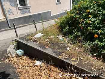 "Giarre, festa di San Vito Martire a Macchia ""tra rifiuti e degrado assoluto"" - Paesi Etnei Oggi"