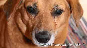 Altensteig - Hundesteuer variiert sehr deutlich - Schwarzwälder Bote