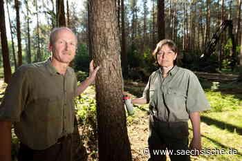 Tausende Bäume fallen in der Dresdner Heide - Sächsische.de