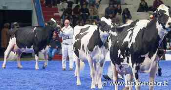Zootecnia internazionale: «Cremona sarà strategica» - La Provincia - La Provincia