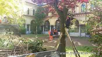Cremona Aree verdi pubbliche, avviate la manutenzione e la messa in sicurezza - WelfareNetwork