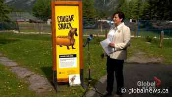 Banff launches education campaign aimed at dog, wildlife safety