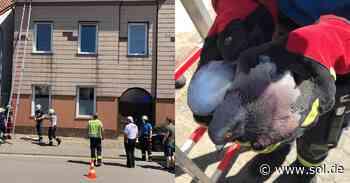 Feuerwehr Merzig rettet Taube aus misslicher Lage - sol.de