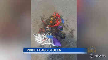 'It's very hurtful,' Mount Pearl councillor says after schools' Pride flags stolen - ntv.ca - NTV News