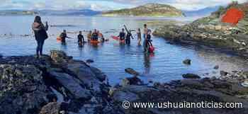 Nadadores fueguinos recibirán el invierno en el Canal Beagle - Ushuaia Noticias