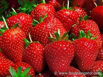 Fighting on-farm food waste through flexible procurement: Tesco's response to a bumper strawberry harvest - FoodNavigator.com