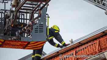 Kater bei Hitze auf Solardach eingeklemmt - Süddeutsche Zeitung