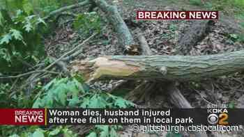 Fallen Tree Branch Hits And Kills Woman In Upper St. Clair Park, Husband Left Injured - CBS Pittsburgh