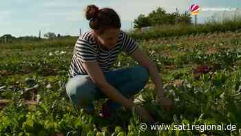 VIDEO | Eigenes Gemüse ernten: Agrarwissenschaftler aus Altenholz vermieten Gemüseparzellen - SAT.1 REGIONAL - Sat.1 Regional