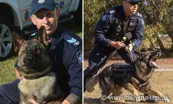 Tragedy as beloved police dog Rambo dies on the job while tracking down a wanted man