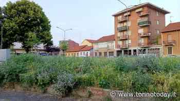"""Torino, giardini abbandonati al degrado: """"L'erba alta è un pericolo per cani e uomini, porta le zecche"""" - TorinoToday"""