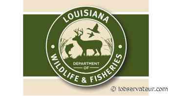 Agents cite Gibson man for deer hunting violations in Terrebonne Parish - L'Observateur - L'Observateur