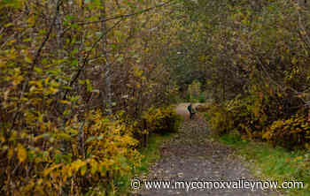 BC Parks Releases Plans for the Summer Months - My Comox Valley Now