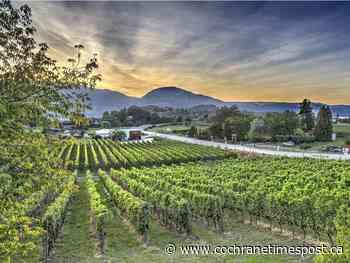 Salut: B.C. wineries embrace new virtual reality - Cochrane Times Post