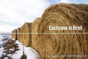 COCHRANE IN BRIEF, June 17 - Cochrane Today