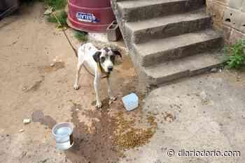 Quem acorrentar animais no Rio de Janeiro terá que pagar multa de R$ 10 mil - Diário do Rio de Janeiro