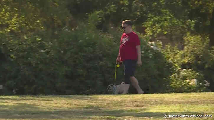 Pet Owners Warned To Avoid Walking Dogs In High Heat