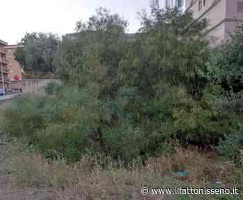 """Caltanissetta, la denuncia di una cittadina: una foresta di rifiuti ed erbacce vicino allo storico """"castelletto"""" - il Fatto Nisseno"""