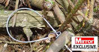 Ban cruel snares that force trapped animals to 'chew off own limbs' to escape - The Mirror