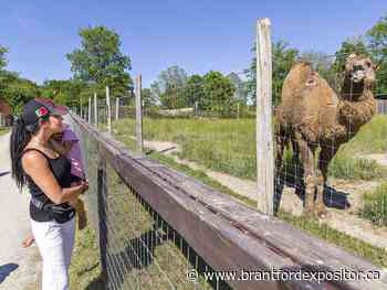 Animals 'super excited' as Twin Valley Zoo reopens - Brantford Expositor