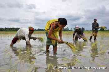 Normal monsoon to support economic recovery; will agri commodity price rally continue in coming days?