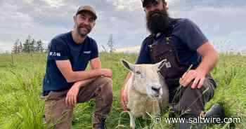 Happier, healthier animals important factor in Kleiner Farms' focus in Yarmouth County   Saltwire - SaltWire Network