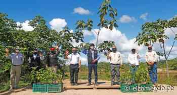 Reserva Nacional Tambopata: logran reforestar el 100 % de las zonas afectadas por la minería ilegal - El Comercio Perú