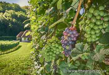 Raise your glass for Sussex in English Wine Week