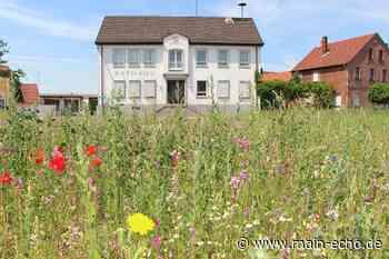 Sulzbach blüht auf: Bunte Wiese mitten im Ort - Main-Echo