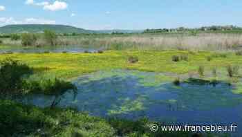 Zoom sur le Marais de Lambre près de Gerzat avec la LPO Auvergne 16 juin 2021 - France Bleu