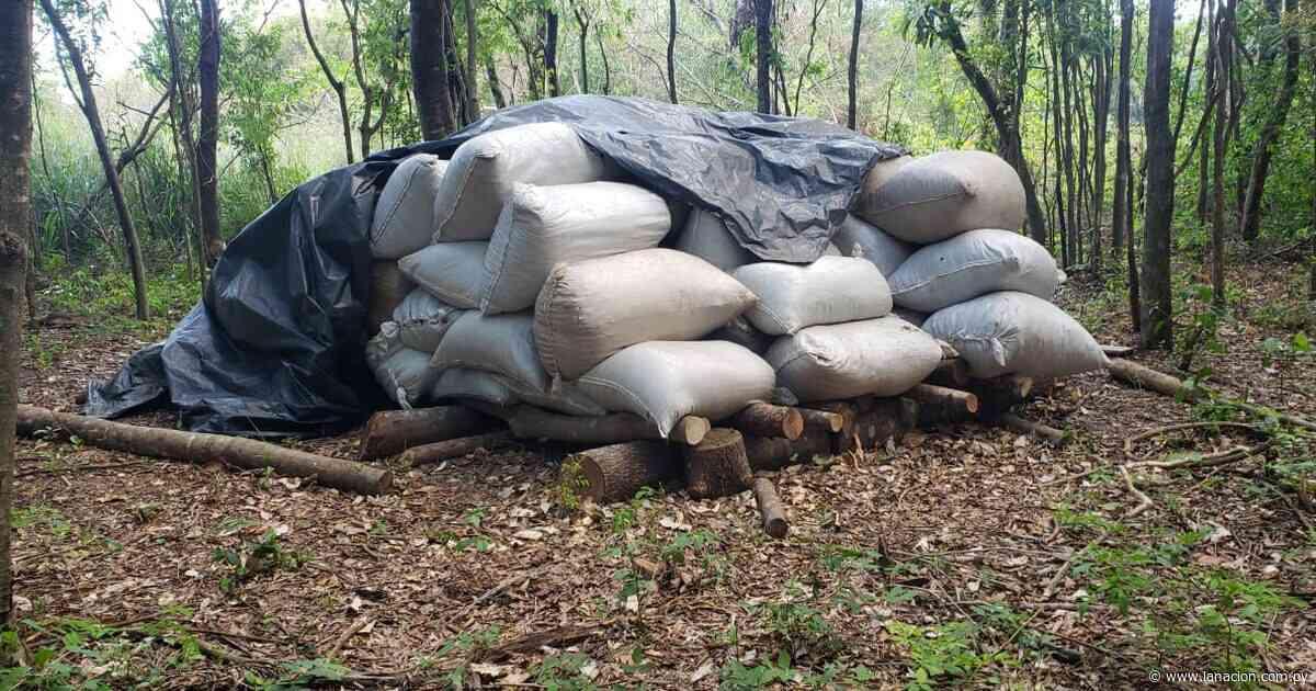 Salto del Guairá: incautan más de 300 kilos de marihuana en la desembocadura del río Paraná - La Nación