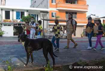 Galápagos: San Cristóbal separa a los perros ya los gatos de la fauna silvestre - expreso.ec