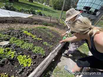 New gardeners add variety at Canmore Community Garden - The Crag and Canyon