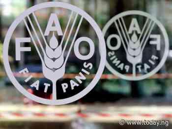 NiMet, FAO strategise to combat food security in Nigeria