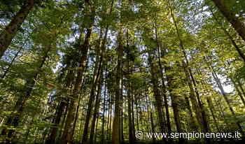 Legnano, un bosco dedicato alle vittime di Covid-19 e un'area per Alda Merini | Sempione News - Sempione News