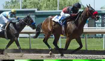 Souper Deputy gallops to first win of Fort Erie racing season - NiagaraFallsReview.ca
