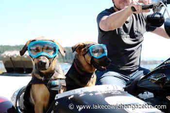Goggling double-dog motorcycle sidecar brings smiles to BC commuters – Lake Cowichan Gazette - Lake Cowichan Gazette