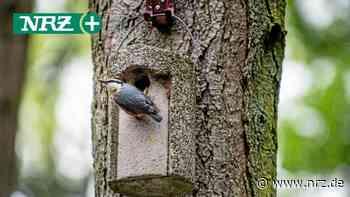 Kamp-Lintfort: Vogelfreunde kämpfen für Artenvielfalt - NRZ