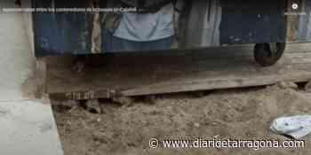 VIDEO: Retirada de urgencia de contenedores en la playa de Calafell para acabar con un nido de ratas - Diari de Tarragona