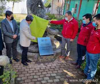 Laja: Inician obras de construcción del nuevo Liceo Héroes de la Concepción - Diario La Tribuna