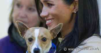 Dog-lover Meghan Markle in touching message to animal owners around the world