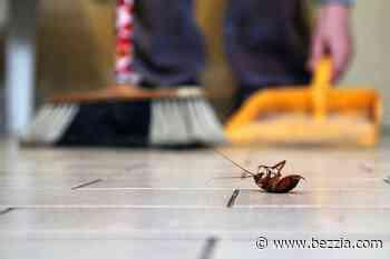 Trucos caseros para evitar los insectos en casa - Bezzia