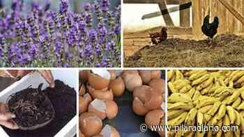 Los fertilizantes orgánicos caseros más eficientes para tu huerta o jardín - Pilar a Diario