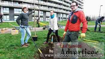 Tree sponsoring Trees for Streets scheme in Tower Hamlets - East London Advertiser